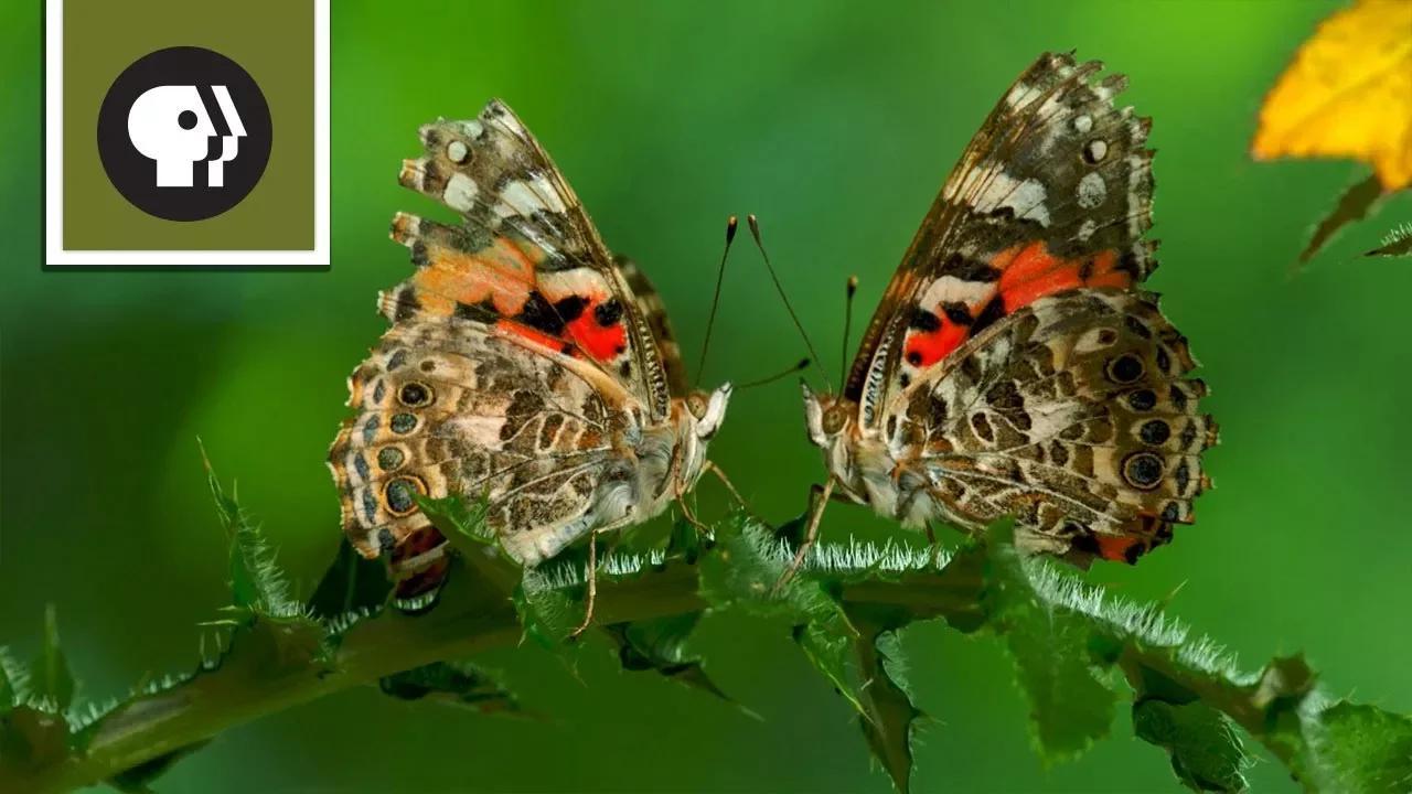 الحشرات بدون موسيقى | Insects No Music (5 فيديو)