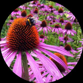 Herb Lore Flower