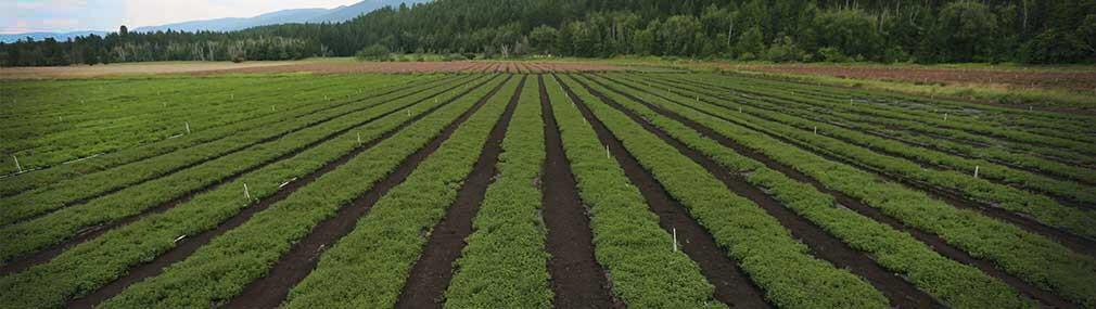 Natural Factors Farm
