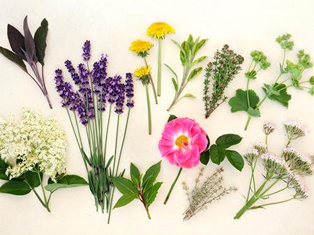 Otosan Natural Ingredients