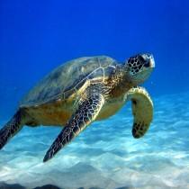 Money Turtle