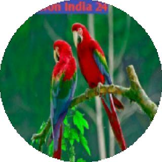 meditation India 24