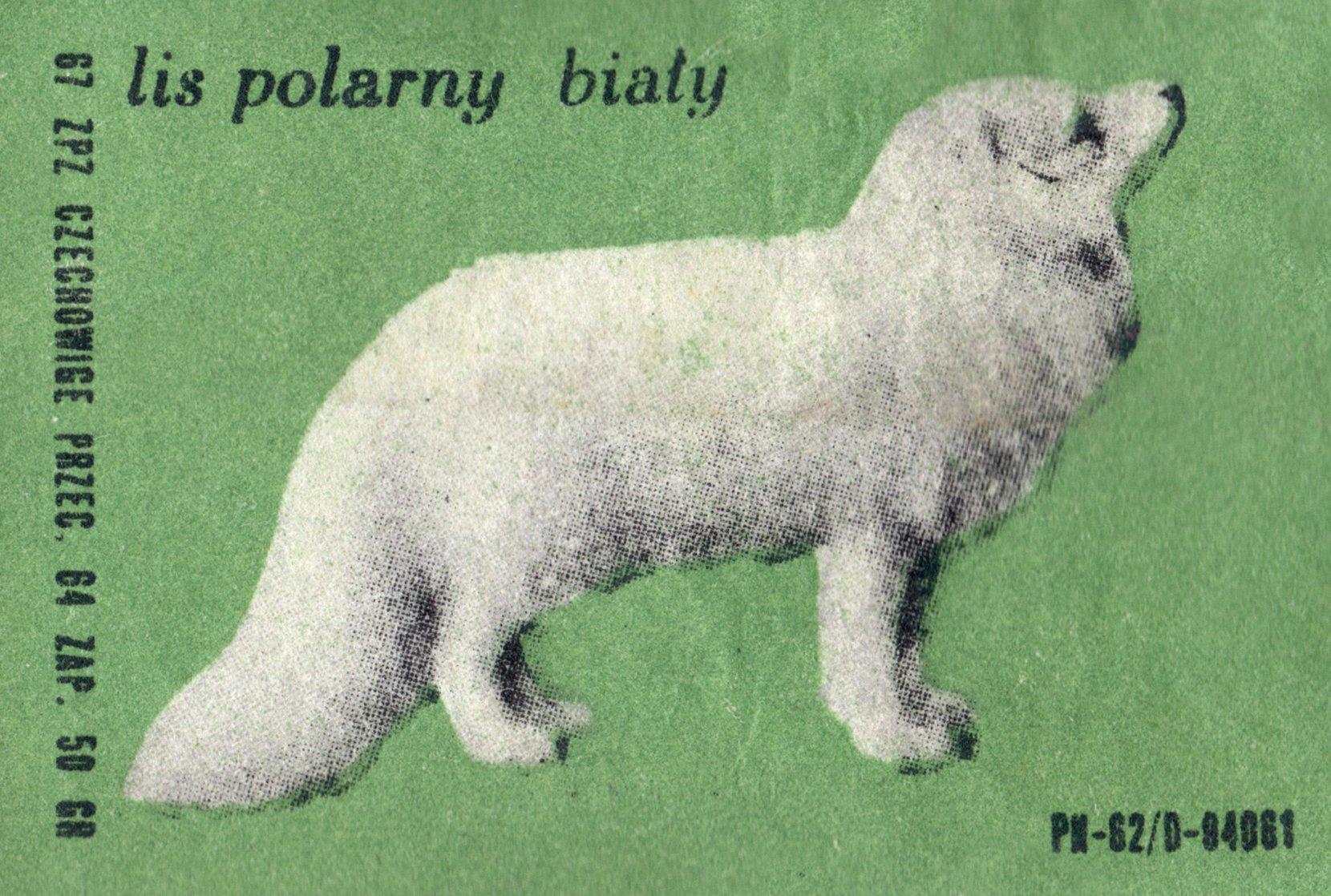 etykieta 60: lis polarny biały (1967) phillumeny matchbox labels