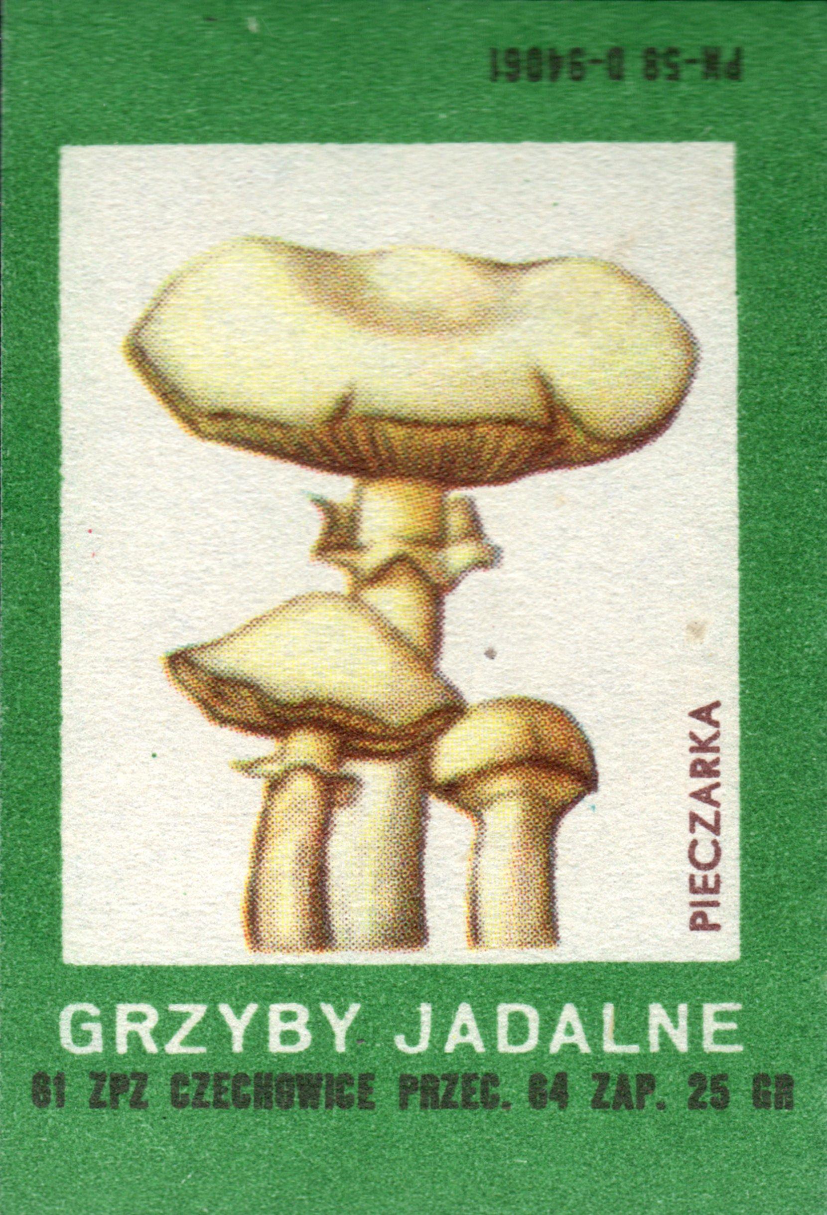 etykieta 64: grzyby jadalne, pieczarka (1961) phillumeny matchbox labels