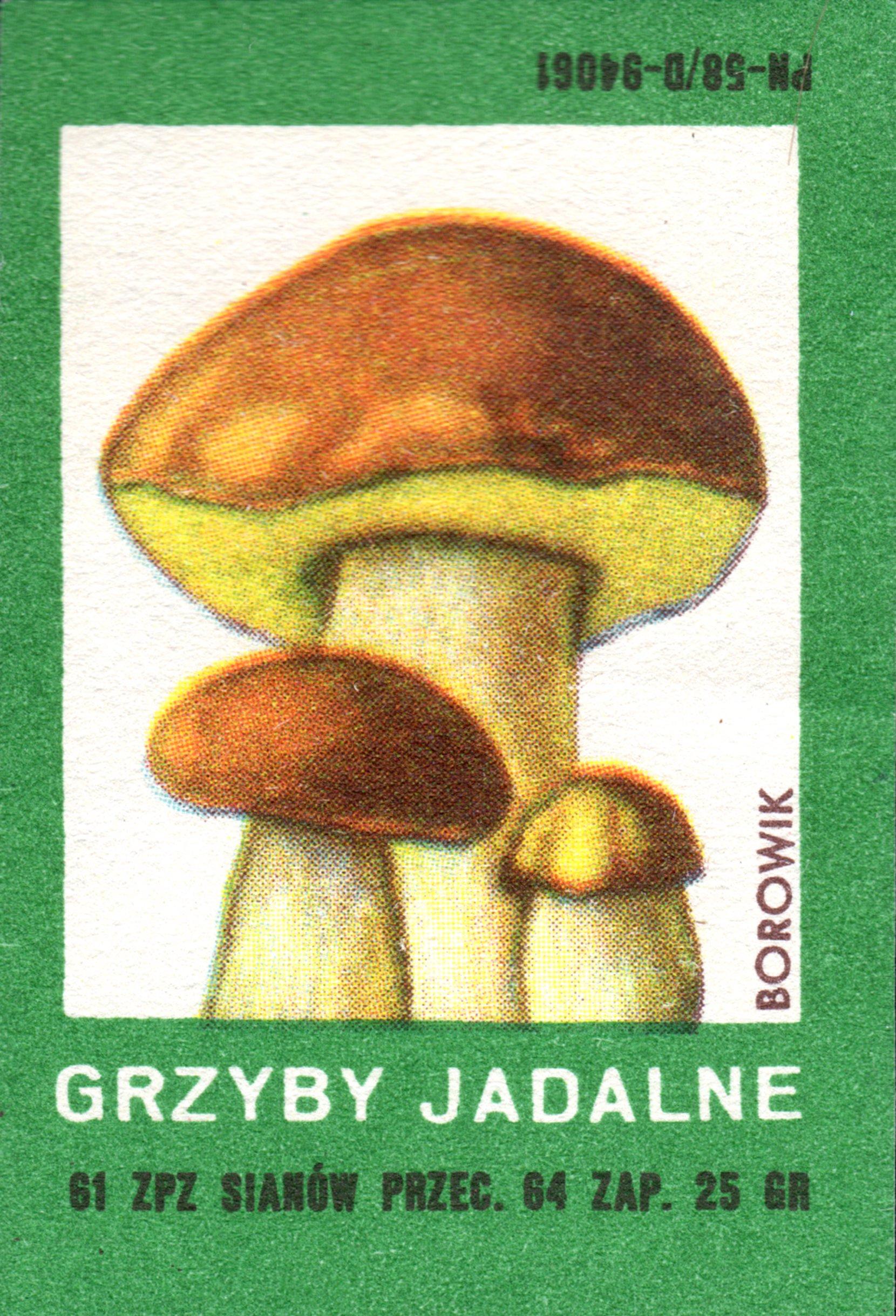 etykieta 66: grzyby jadalne, borowik (1961) phillumeny matchbox labels