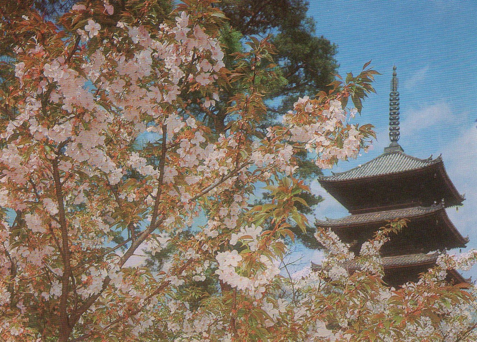 ninna-ji temple in spring, kyoto (japan ) postcards standard – printed card