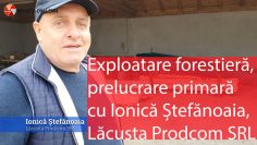 Exploatare forestiera Ionica Stefanoaia Lacusta Prodcom