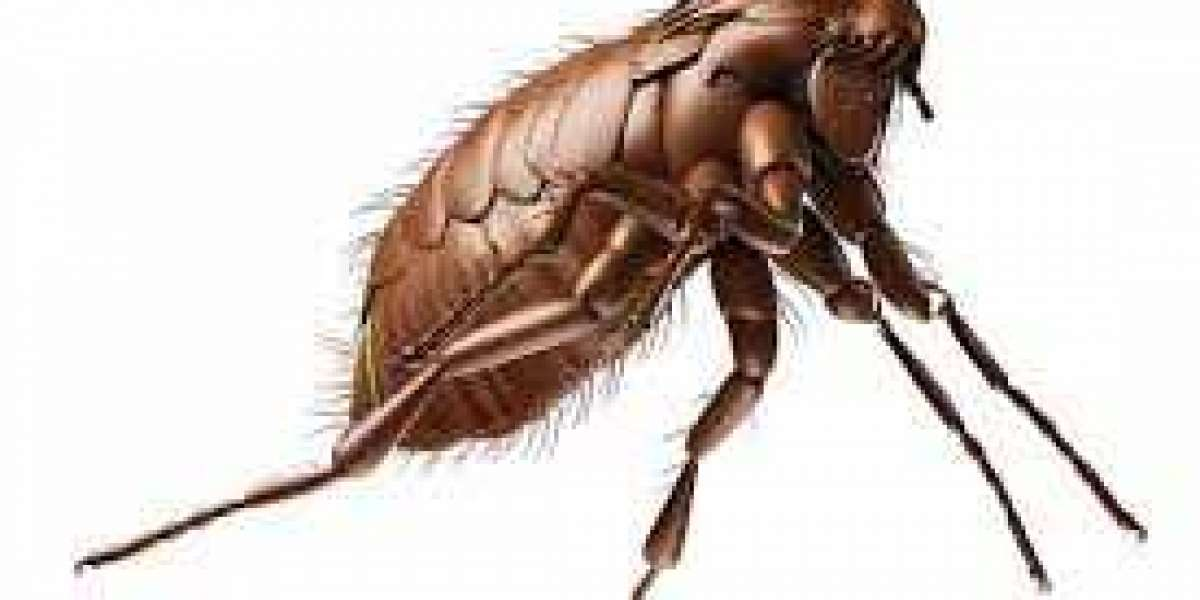 Pest Control and Termite Inspection in Suburban Areas