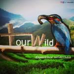 Tour Wild Profile Picture