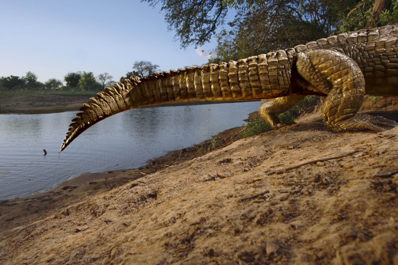 50 Greatest Wildlife Photographs