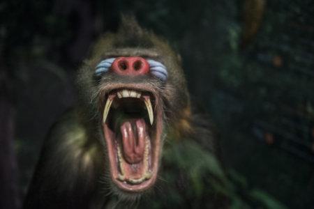Monkeys! exhibition opens in Barcelona!