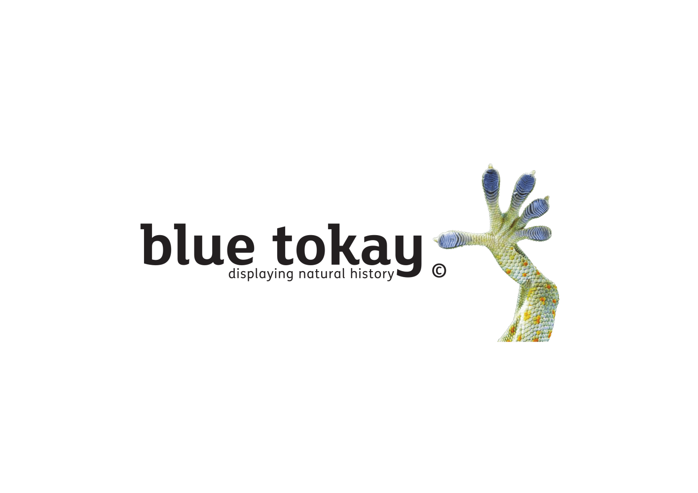 Blue Tokay Ltd