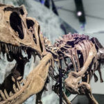 Call for partner venues for Giants of the Jurassic exhibition