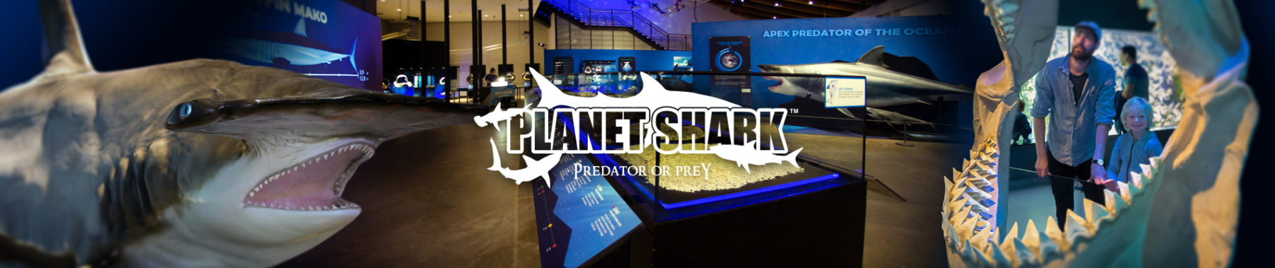 Planet Shark: Predator or Prey