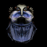 Portraits of Insects