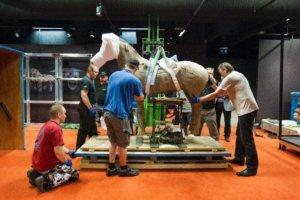 It's a team effort. Installing one of the Terracotta Army horses in 2013. Photo: Marika Tamminen, Vapriikki Photo Archives.